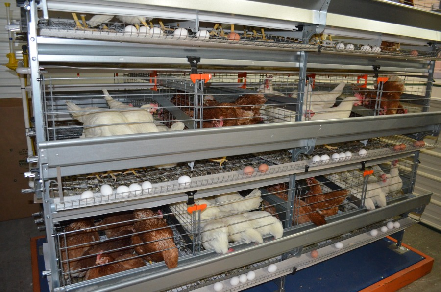 This display of layers helps illustrate egg production, and allows consumers to ask questions about chickens and eggs. Many people are surprised to learn that there's no nutritional difference between brown and white eggs.
